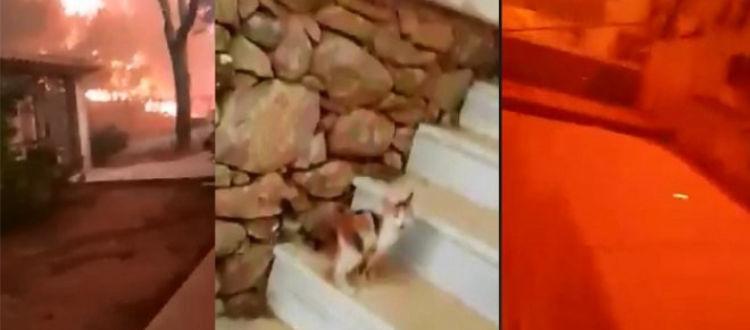 Προσπάθησε να σώσει γατάκι και η φωτιά πέρασε από πάνω του
