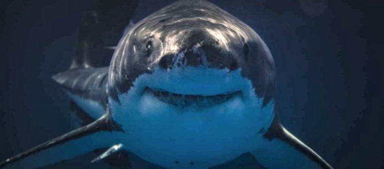 Τα 10 πιο θανατηφόρα είδη καρχαριών