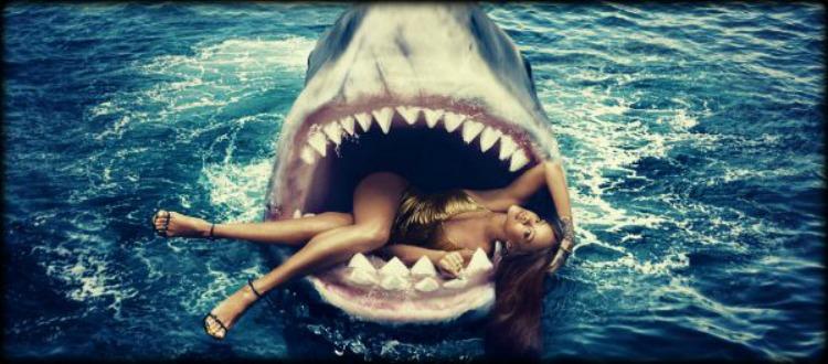 Ο κόλπος του καρχαρία γεμάτος καρχαρίες