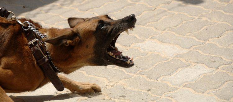 Τι να κάνετε σε επίθεση σκύλου