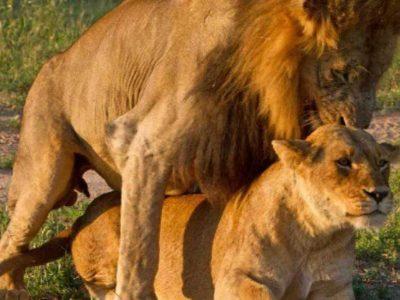 Τα ζώα κάνουν σεξ και οι κάμερες καταγράφουν