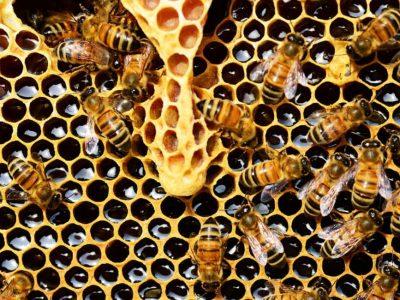 Είναι το μέλι σας φυσικό