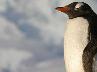 Πάμε για δουλειά στην Ανταρκτική