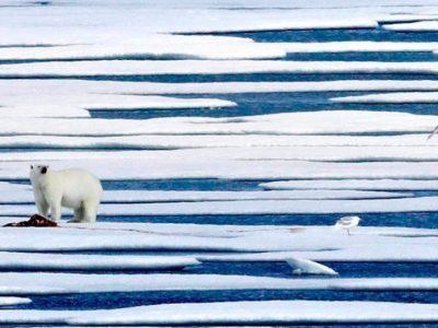 SOS από την Γροιλανδία που λιώνει