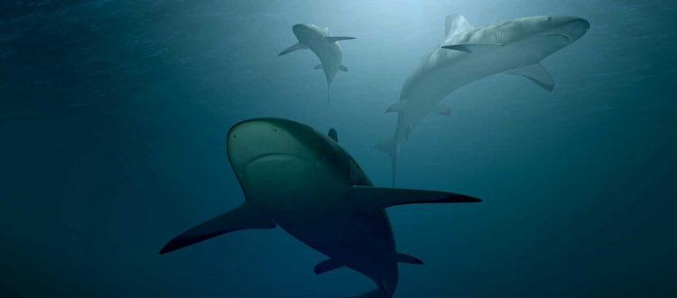 Μειώνεται δραματικά το οξυγόνο στους ωκεανούς