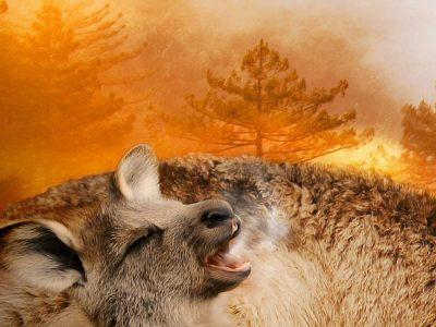 Ανυπολόγιστη η καταστροφή των πυρκαγιών